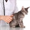 Ветеринарные клиники в Шимске